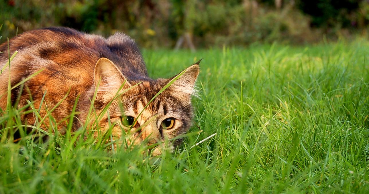 Catstalkprey