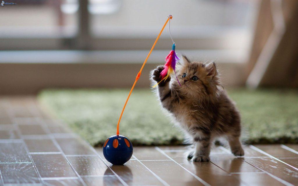 gattino-marrone,-giocattolo-199952
