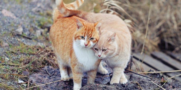 Две кошки в одном доме