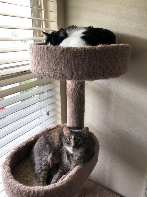 Как подружить кошек?