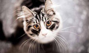 Как отучить кошку от вредных привычек