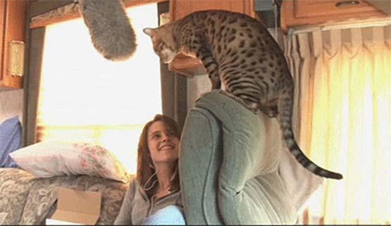 Кристен Стюарт (Kristen Stewart )