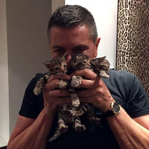 Стефано Габбана и его бенгальские котята