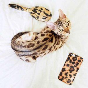 бенгальская кошка фото (16)