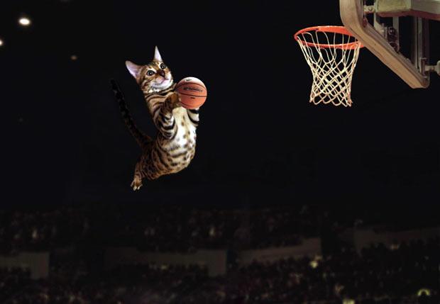 simba-basketball-sports
