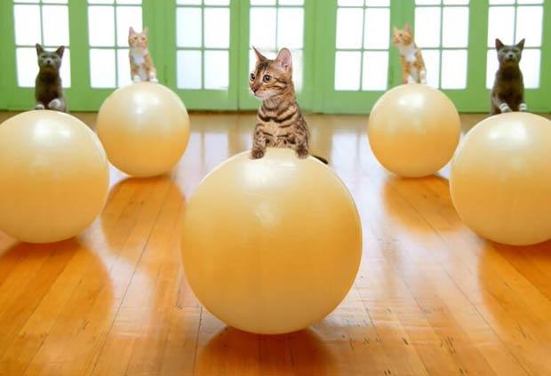 simba-cat-fitnes-sport