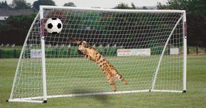 Бенгальская кошка Симба играет в футбол