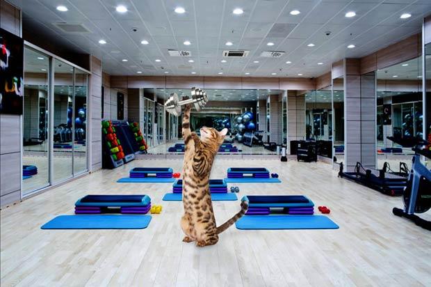 simba-gym-sports