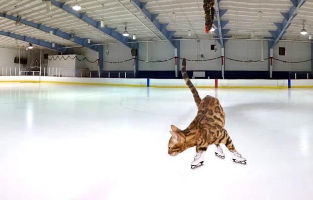 simba-ice-skating-sports