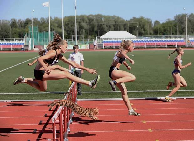 simba-running-sport