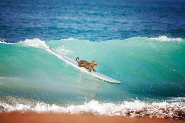 simba-surfing-sport