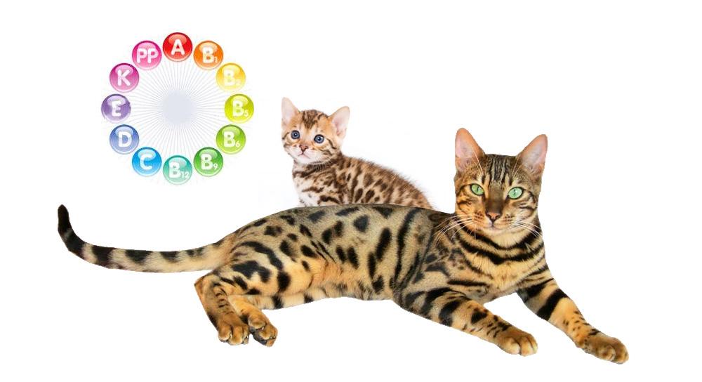vetamins_cats
