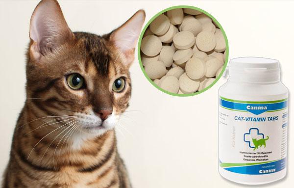Кошачьи витамины и пищевые добавки: они работают?