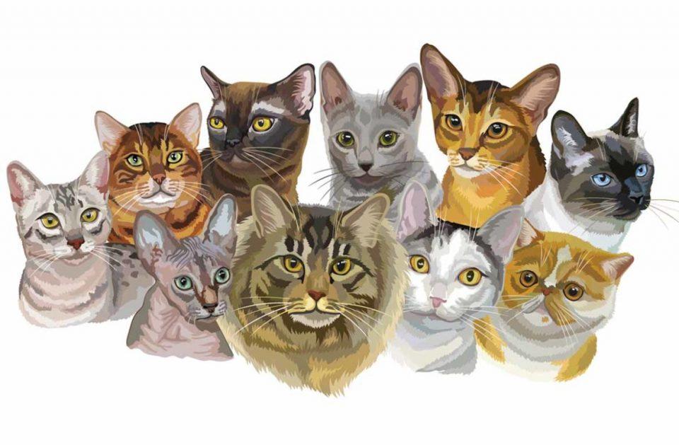 Все породы домашних кошек и котов с фотографиями и названиями: фото, описание характера