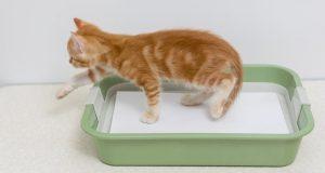 Как приучить котенка к лотку быстро