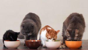 какой корм выбрать для кошки