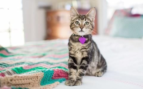 Как приучить котенка к лотку: