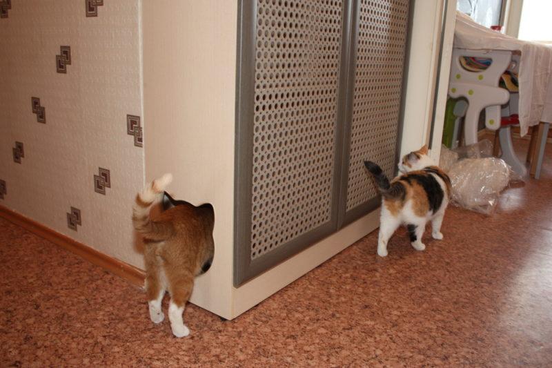 Самодельный кошачий туалет