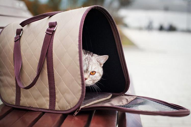Кошка боится переноски