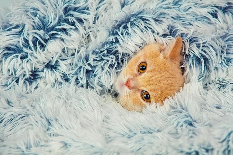 Кошка мерзнет