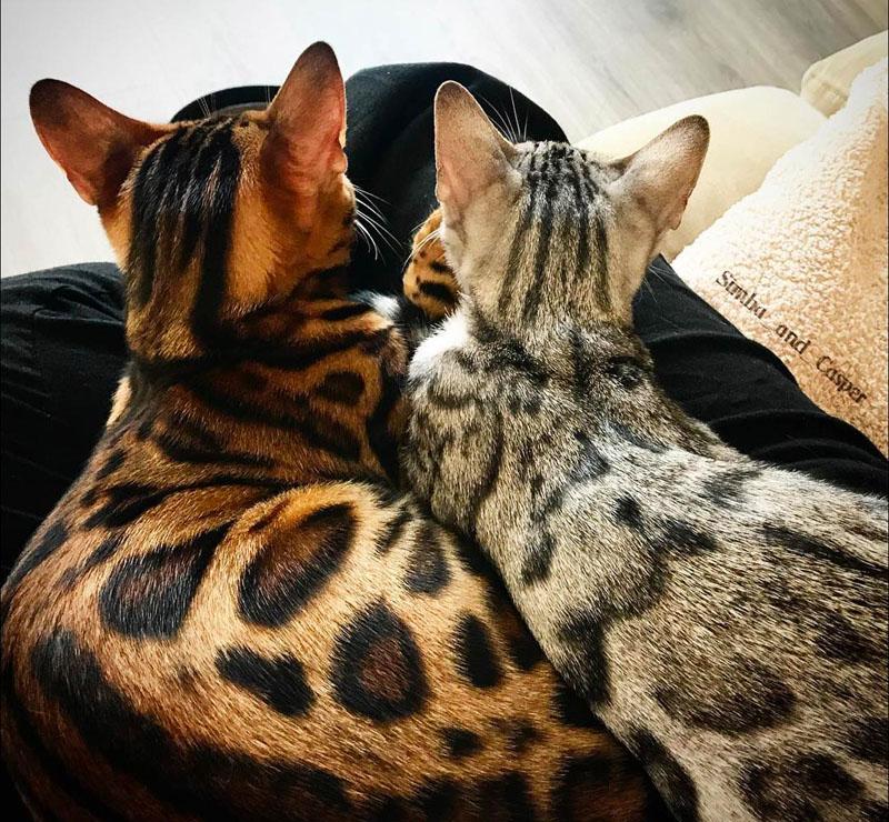 фото расцветок кошек мире