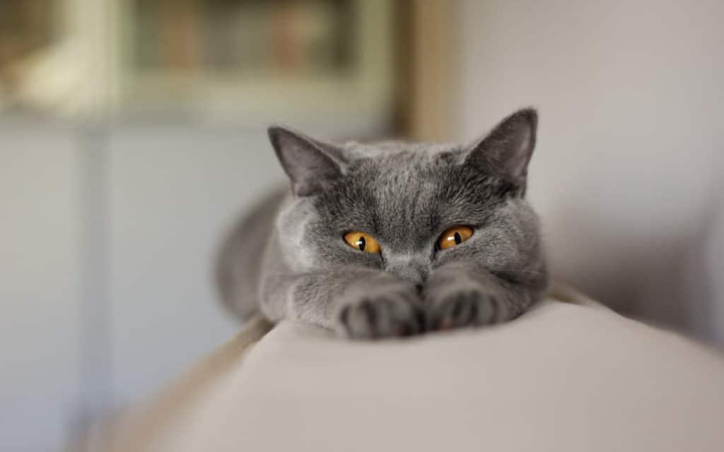 Что делать если у кота болячки на губах?