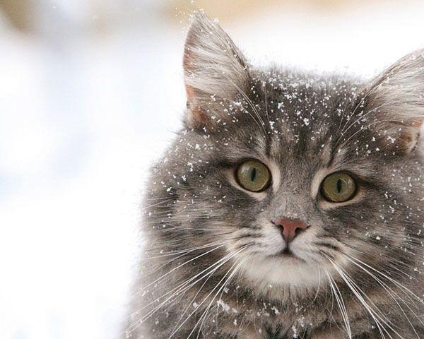 При какой температуре кошки могут жить на улице