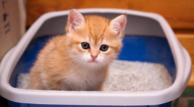 Понос у котенка, как лечить, что делать?