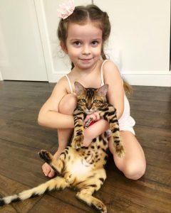 Бенгальская кошка и дети