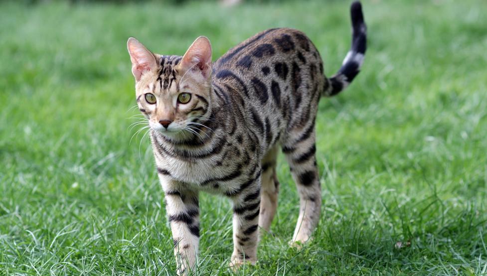 кожные заболеваний у кошки. лечение