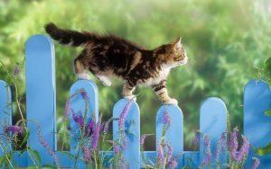 Кот не сможет выжить при экстремально низких температурах!
