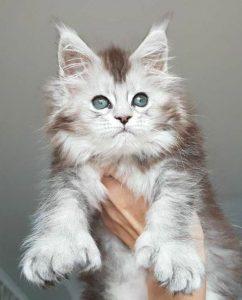 Игрушки для котят мейн-кун