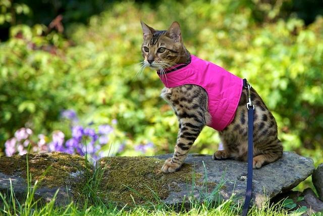 Лучшая шлейка для Вашей кошки в 2019 году