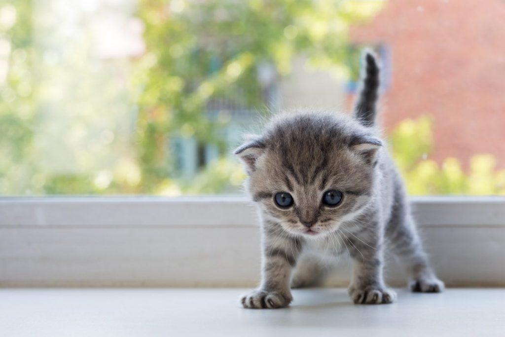 Что можно и нужно купить для котенка