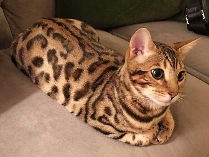 Открытки с изображением кошек фото япония уже прошел