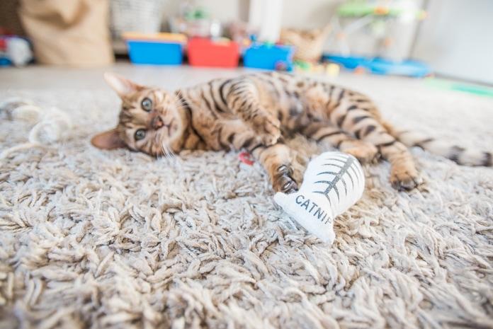 игрушка кошачья мята