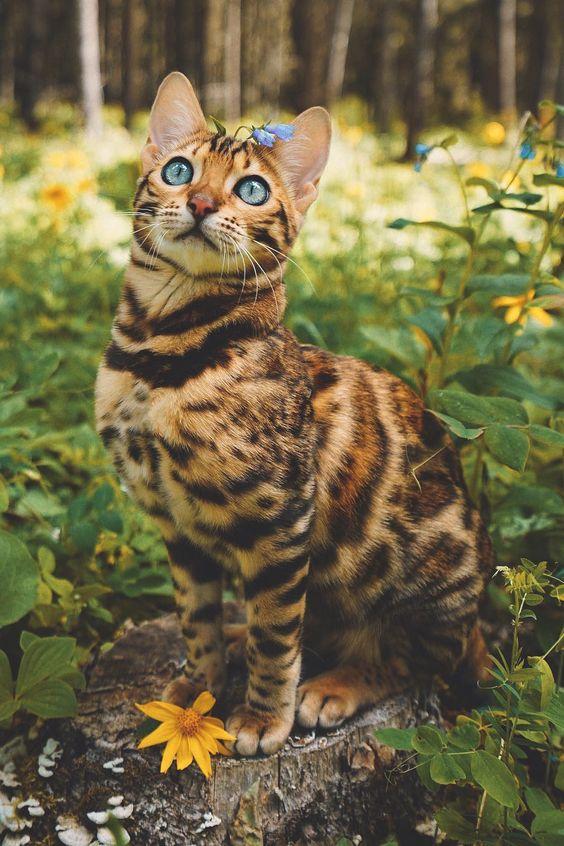 Какая польза от кошачьей мяты для кошек