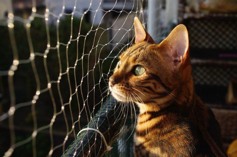 вольер для кошки