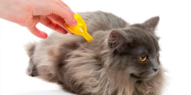 Лучшее лечение блох для кошек