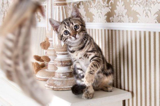 Кошачье Экологическое Обогащение-Основы