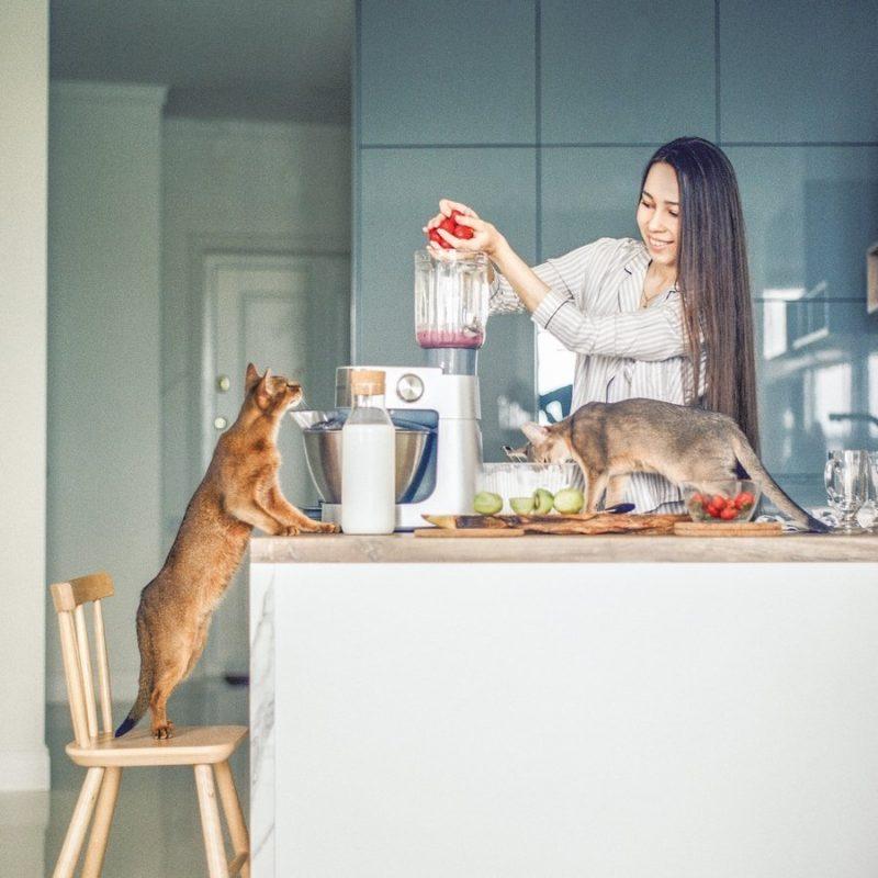 Потребности в питании для домашних и уличных кошек: есть ли разница?