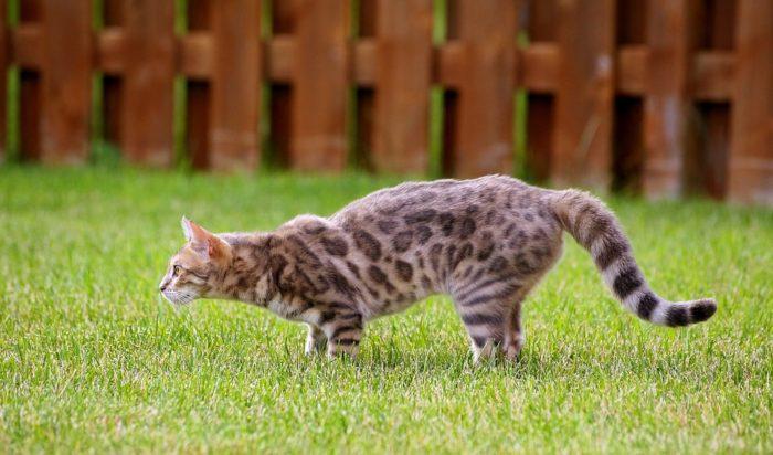 Уличные кошки и какую едуони выбирают
