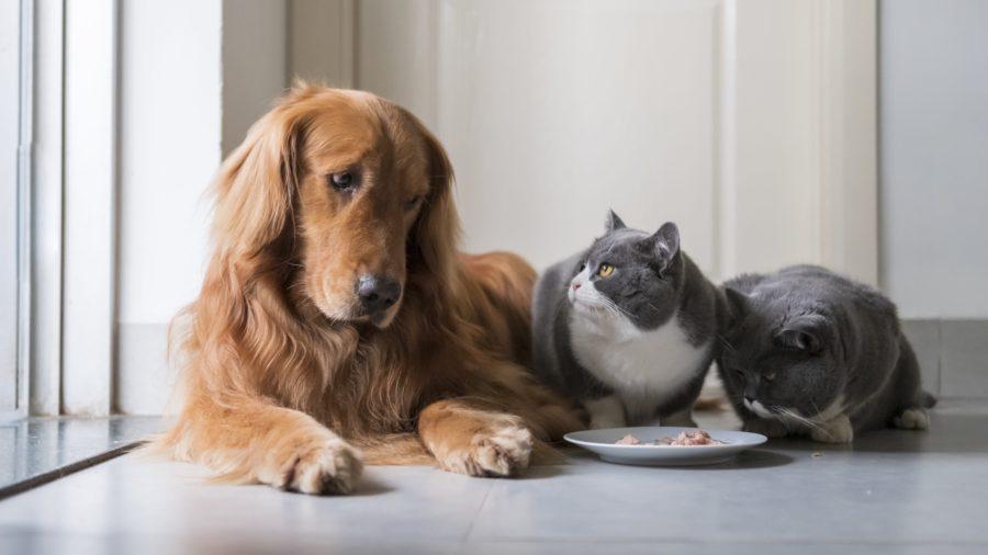 На что нужно обратить внимание в питании кошки?