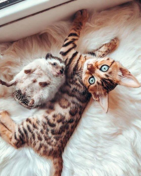 Бенгальские котята меняют окрас?