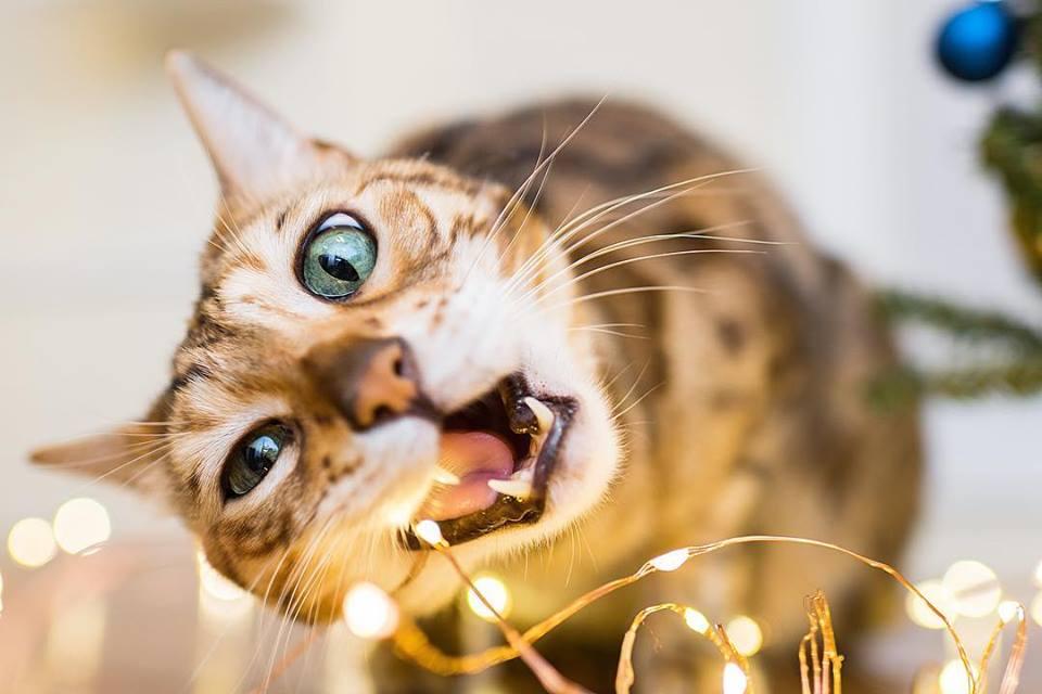 Как выбрать действительно хорошую еду для кошек