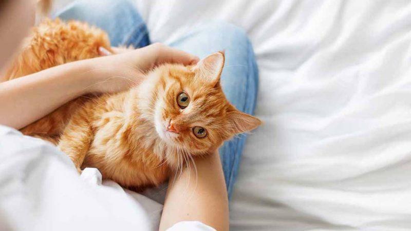 что делать, если кошка отравлена