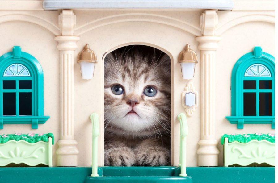 Домик для кошки