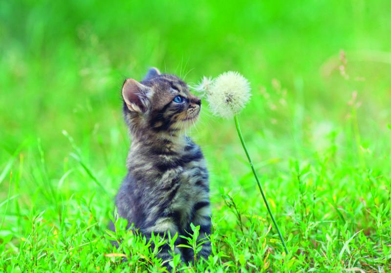 Аллергия у кошек и собак — ветеринарный справочник