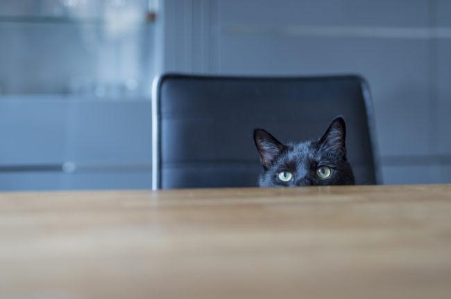 39 лучших имен для черных кошек