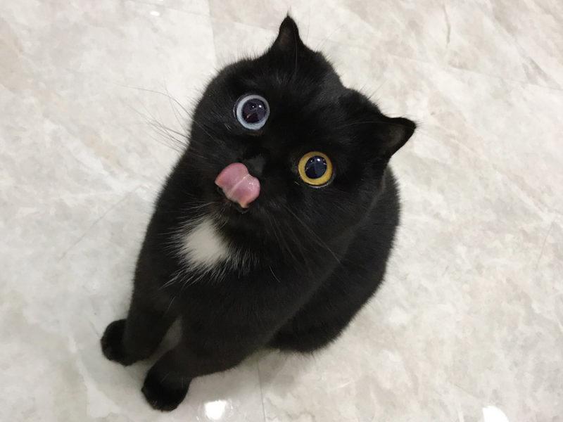 39 лучших имен для черных кошек (фотографии)